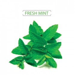 MINT E LIQUID 10 ML